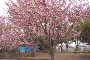 2013417_kazeyoketento